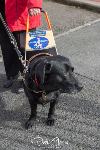 Guide Dogs-12