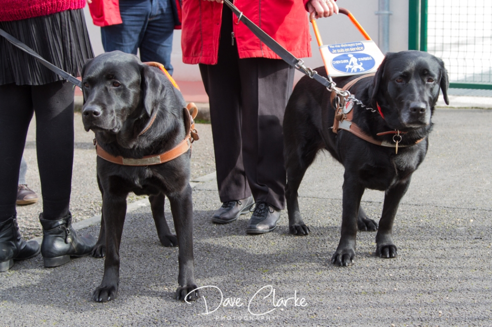 Guide Dogs-13