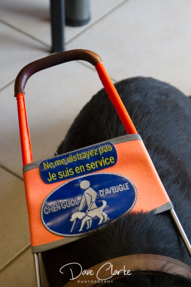 Guide Dogs-14