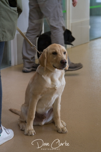 Guide Dogs-3