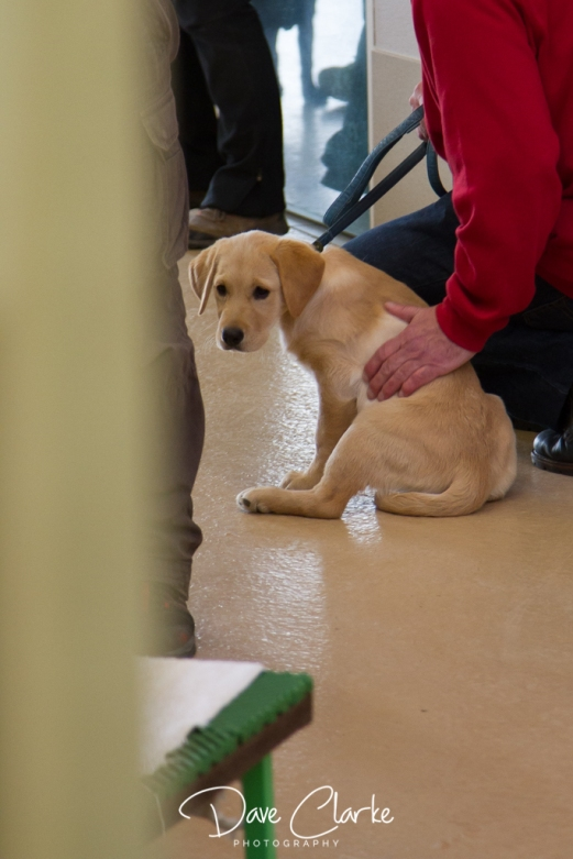 Guide Dogs-4