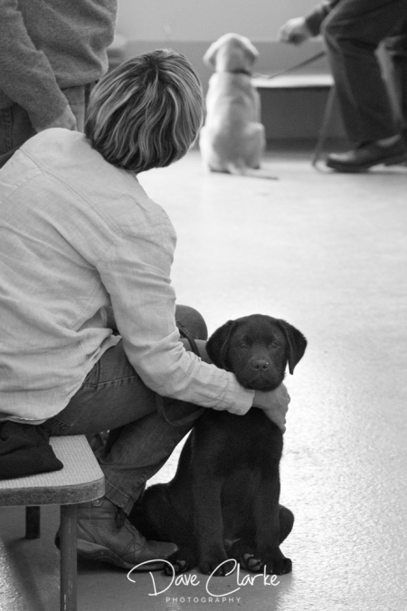Guide Dogs-5