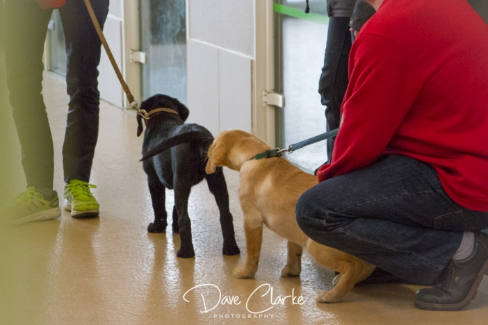 Guide Dogs-6