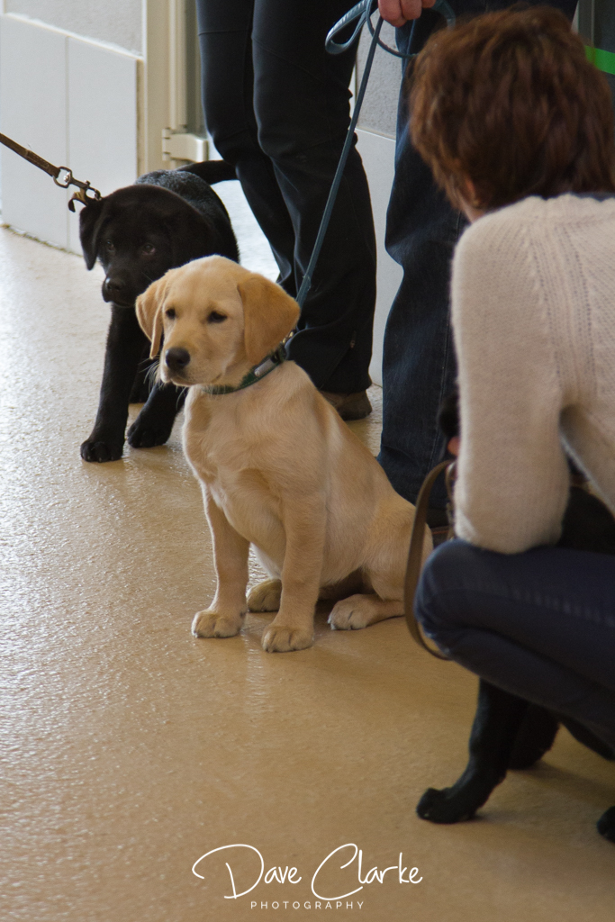 Guide Dogs-7