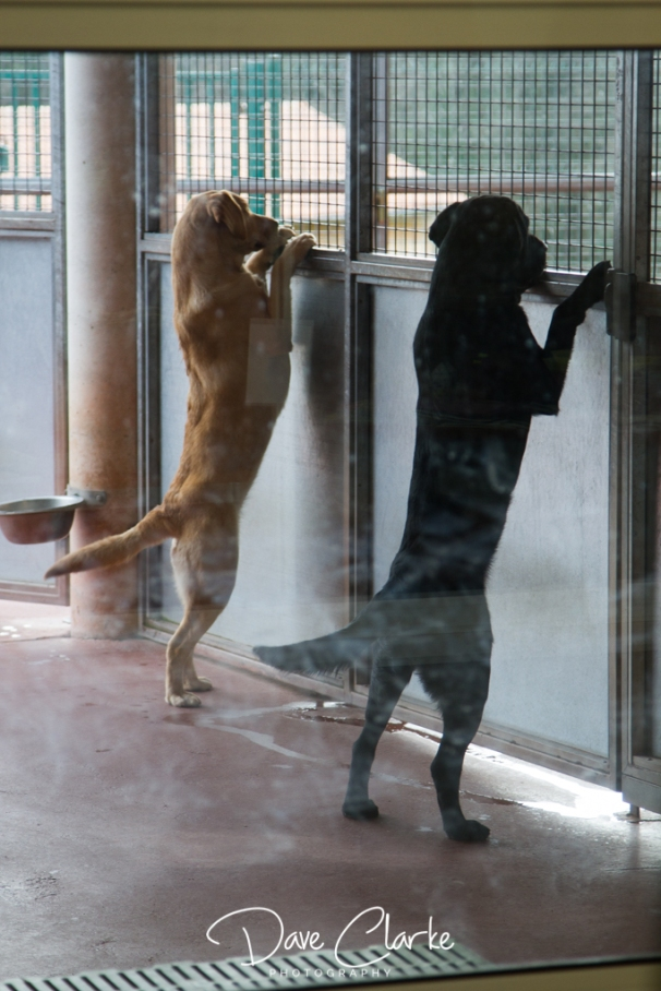 Guide Dogs-8