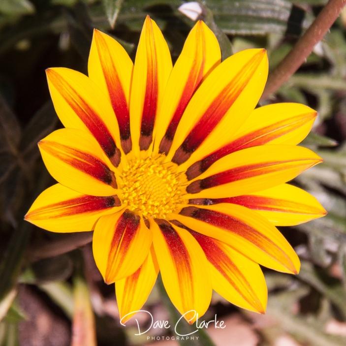 _MG_0589-2011-07-31