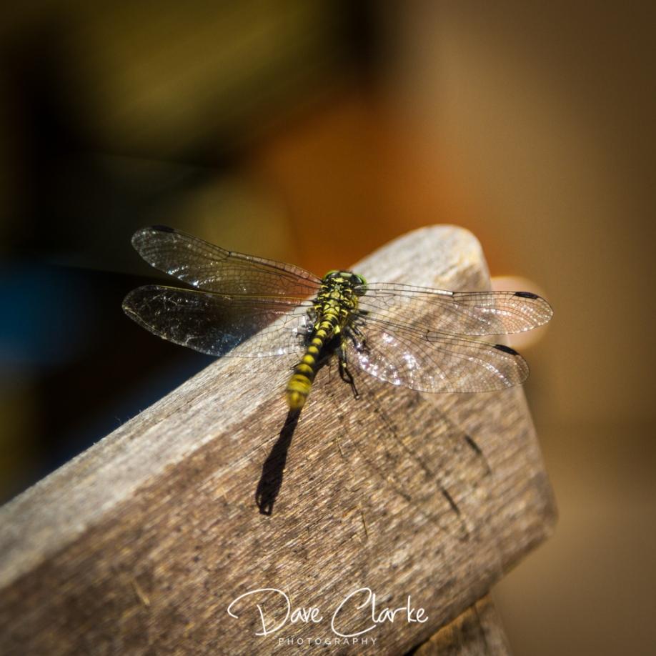Nature_4526
